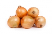 Cippolinis onions Italy