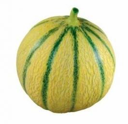 Charentais melons Dominican Republic