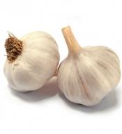 White garlic France